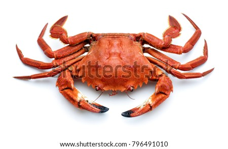 cooked spanish necora,atlantic crab isolated #796491010