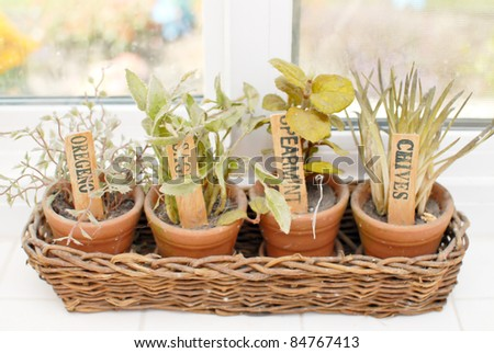 Cooking Spice Plants on Window Sill
