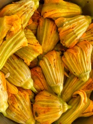Cooking stuffed zucchini flowers, squash blossom. Turkish delicacy stuffed with rice, tomato, and herbs
