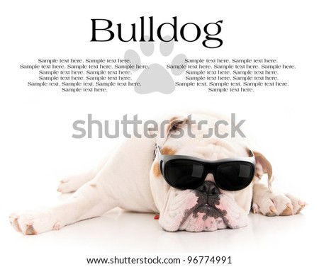 Cool Bull Dog Wearing Sunglasses Resting with Text Space Above