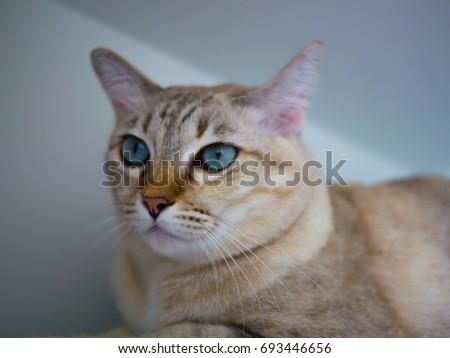 cool cat #693446656