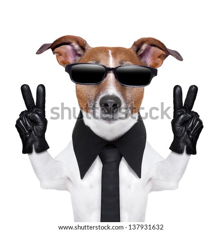 cool dog with peace fingers in black leather gloves