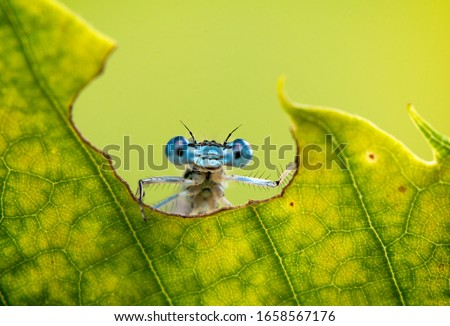 Cool funny macro image of a dragonfly on a leaf. Natural background and close up portrait of dragonfly with big eyes. stock photo