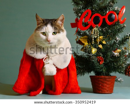 cool tom cat in santa claus garment mantel with white fur collar sit beside small christmas tree in pot