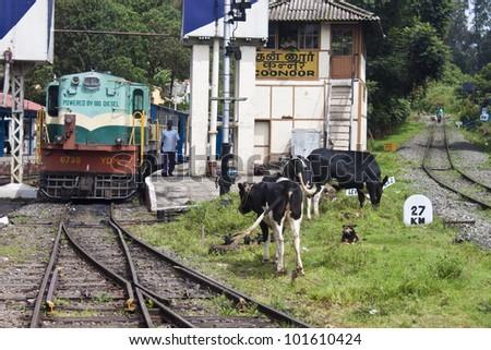 COONOOR, INDIA - AUGUST 25: Old narrow gauge train on August 25, 2011 in Coonoor in Nilgiri mountains, India. Nilgiri Mountain Railway was built in 1908 and still uses original locomotives.