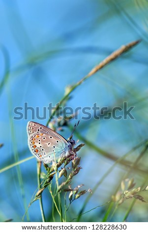 copper-butterfly in the green grass against the bright blue sky
