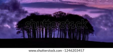 copse of trees at sunset devon england uk