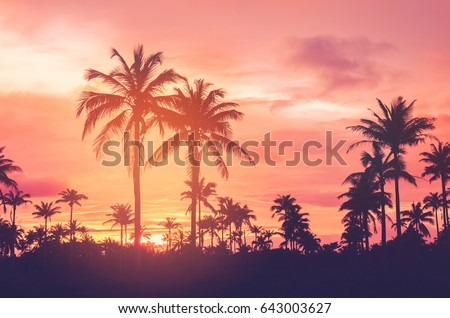 Copy space of silhouette tropical palm tree with sun light on sunset sky and cloud abstract background. Summer vacation and nature travel adventure concept. Vintage tone filter effect color style. - Shutterstock ID 643003627