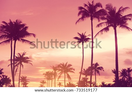 Copy space of silhouette tropical palm tree with sun light on sunset sky and cloud abstract background. Summer vacation and nature travel adventure concept. Vintage tone filter effect color style. #733519177