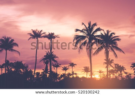 Copy space of tropical palm tree with sun light on sunset sky background. Summer vacation and nature travel concept. Vintage tone filter color style.