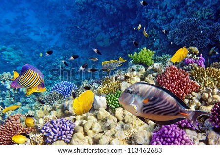Coral and fish in the Red Sea.Egypt #113462683