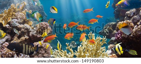 Coral and fish in the Red Sea.Egypt #149190803