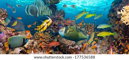 Coral and fish in the Red Sea.Egypt #177536588