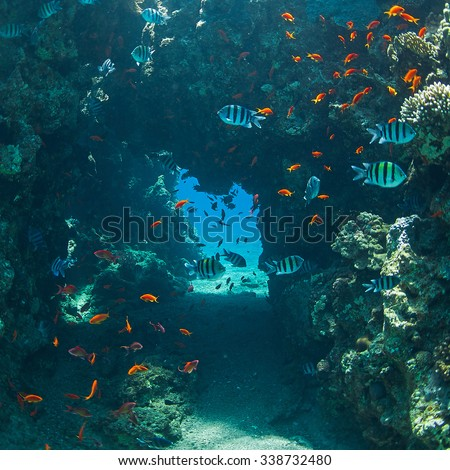 coral and fish in the sea at ten meters