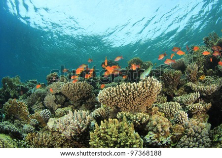 Coral and Tropical Reef on a shallow reef