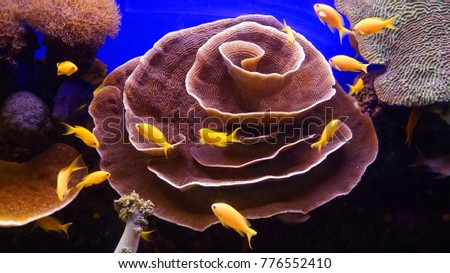 Coral and yellow fishes #776552410