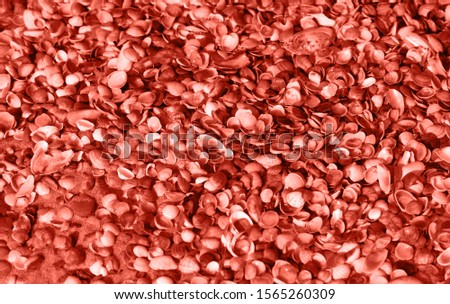 Coral background of different seashells. Mollusk shells. Texture of the shells