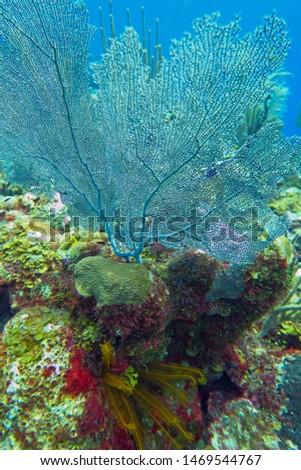 Coral Cluster - Belize Barrier Reef #1469544767