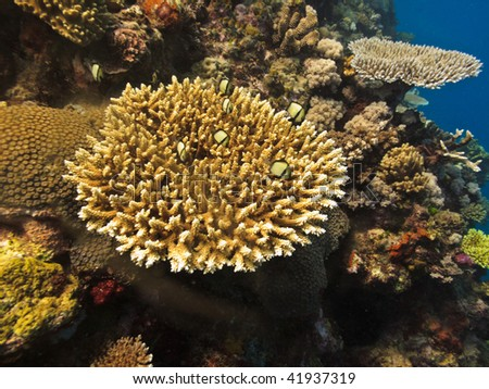 Coral Colony on Great Barrier Reef