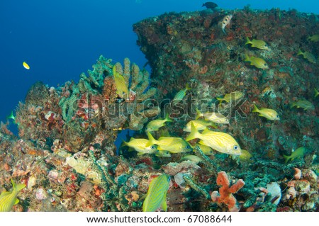 Coral encrusted artificial reef composition with fish in the foreground, picture taken in Deerfield Beach, Florida.