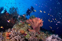 Coral, Fish and Divers on the Great Barrier Reef!