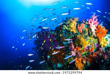 Coral fishes in underwater scene. Underwater coral fish shoal. Beautiful underwater world scene. Underwater coral fishes