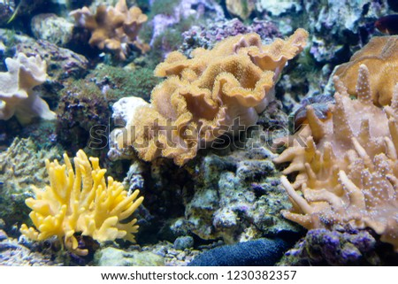 Coral. In the center of the picture is a leathery mushroom coral, one of the most popular soft corals. It is very similar to a mushroom. Widely distributed in the Indian and Pacific oceans.