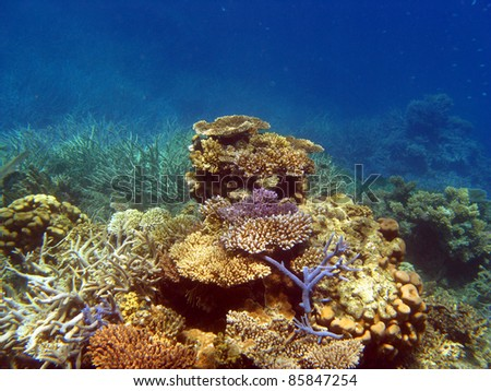 Coral landscape on the Great Barrier Reef, Queensland Australia