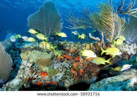 Coral Ledge Composition with schooling with fish, picture taken in Broward County Florida.