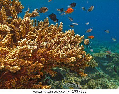 Coral on the Great Barrier Reef Marine Park Australia - stock photo