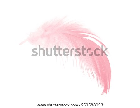 coral pink feather on white background