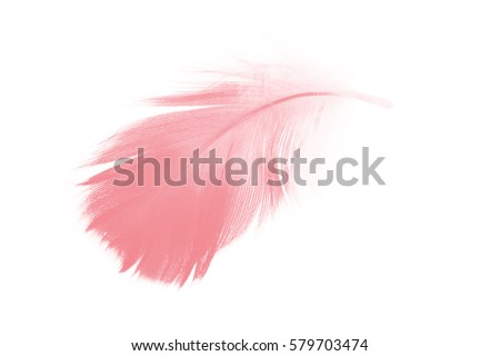 coral pink feather on white...