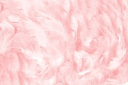 Coral Pink vintage color trends feather pattern texture background