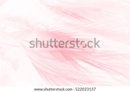 Coral Pink vintage color trends feather texture background #522023137