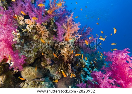 Coral reef 2 - stock photo