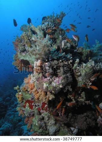 coral reef #38749777