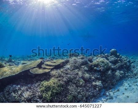 Coral Reef #645071227