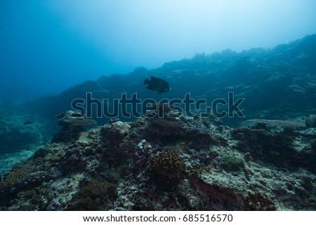 coral reef #685516570