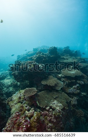 coral reef #685516639