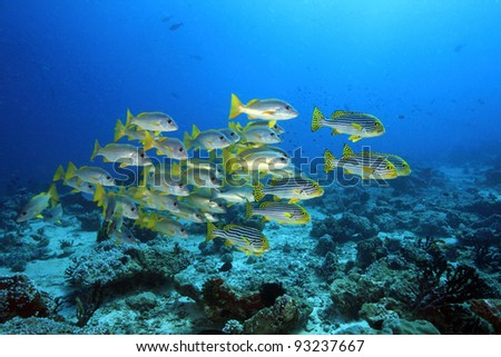 Coral reef and fish in the indian ocean