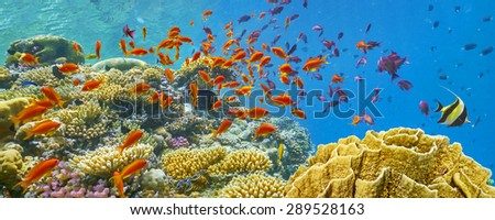 Coral reef and fish Red Sea Egypt