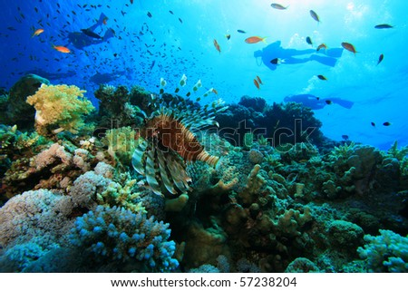 Coral Reef and Scuba Divers
