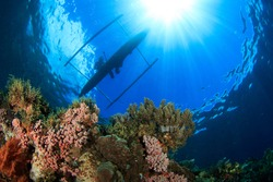 Coral reef and silhouette of small wooden outrigger fishing boat on the water surface with sun rays. Underwater image taken scuba diving in Indonesia