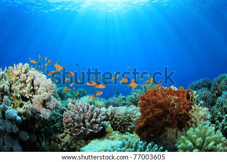 Coral Reef and Tropical Fish in Sunlight #77003605