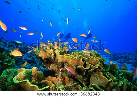 Coral Reef and Tropical Fish with Scuba Divers in the background