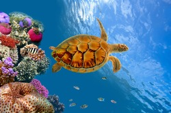 Coral reef and turtle , Siam Bay, Thailand