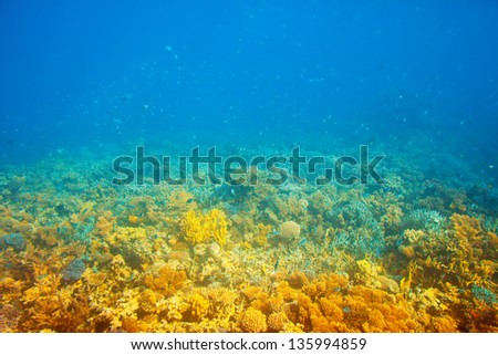 coral reef area in Red sea