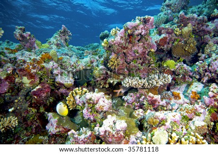coral reef - bright colours