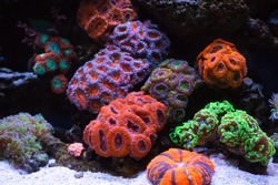Coral reef colony