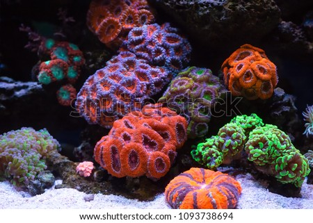 Coral reef colony #1093738694